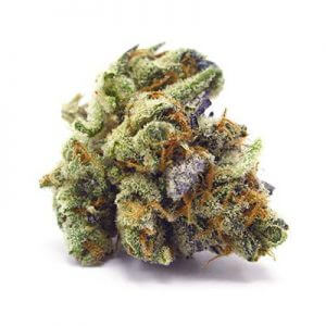 Buy Haze Marijuana Strain UK