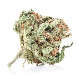 Moby Dick Weed Strain UK